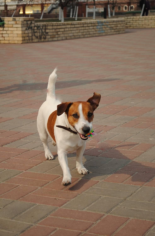Все породы собак c ФОТО Ценами Рейтингом и комментариями